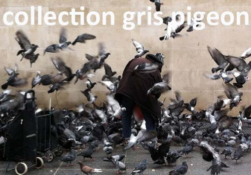 collection gris pigeon