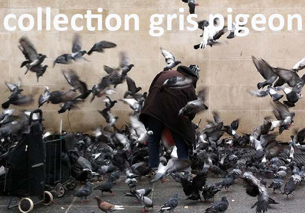 0-collection gris pigeon